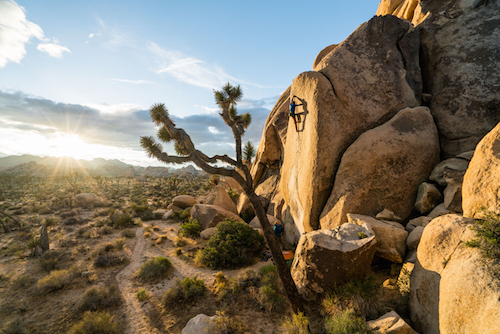 Climb Like a Local: Joshua Tree